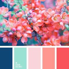 Find this Pin and more on All color pallets from In Color Balance. Colour Pallette, Color Palate, Colour Schemes, Color Combos, Color Patterns, Coral Color Palettes, Coral Colour, Nature Color Palette, Purple Colors