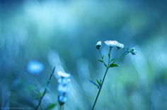 Again.. by icemanphotos, via Flickr