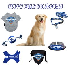 Kentucky Wildcats Dog Ensemble, created by ajudson on Polyvore
