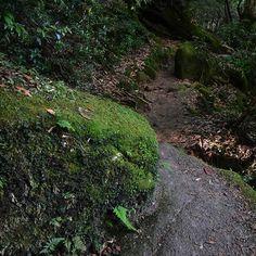 【toshiki0206】さんのInstagramをピンしています。 《歩行者の視点から 白谷雲水峡をあるく。  Walker's point of view. Shirataniunsuikyo,Yakushimaisland (2016.8.19)  #pointofview #treaking #treak #yakushina #yakushimaisland #shirataniunsuikyo #naturephotography #nature #forest #greenforest #green #nikon #nikonphotographers #nikon_photography #nikond7200 #d7200 #nikontop #nikontravel #travel #nikonjapan #屋久島 #屋久島中毒 #白谷雲水峡 #森 #トレッキング #discoverjapan #japantravel》