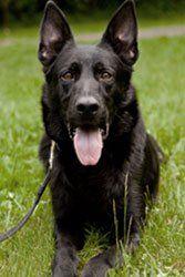 Pin By Marysville Dog Training On Yuba City Dog Training Dog