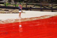 An algae bloom near Sydney, turns the sea blood red.