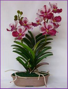 Vanda Orchids Care