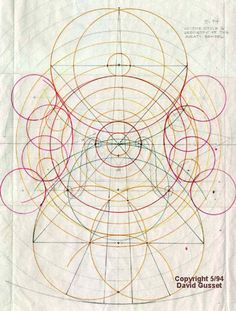 """""""David Gusset 