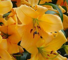 RA 15 Inch Mini Solar Poppy Stake-Orange//Yellow
