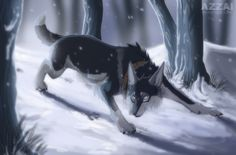 A wolf going into a dark, snowy, forest, walking away from the light.