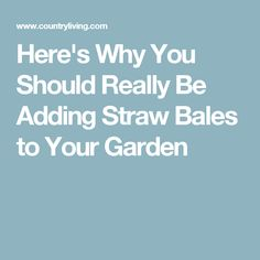 Here's Why You Should Really Be Adding Straw Bales to Your Garden