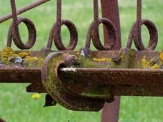 rust and moss...