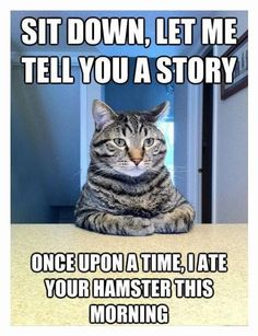 Cats Are Good Storytellers