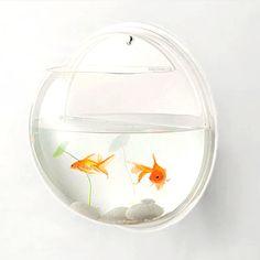Petit poisson rouge