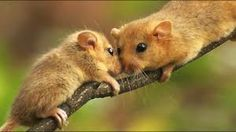 mogyorós pele - Google-keresés Bird, Cute, Animals, Image, Google, Photos, Birds, Animales, Pictures