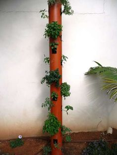 A vertical planter accommodates growing in a very small area while conserving water with top-down irrigation. The only concern here is with using PVC.