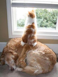 23 Karede Kedi Altı Köpek Köpek Altı Kedi | sosyogig