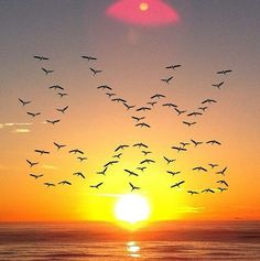 Birds = JW.org