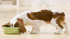 We've developed a great tasting food for the small breed dog you love! Learn how you can have your pooch coming back to the bowl time after time with our New Bil-Jac Small Breed Senior Dog Food