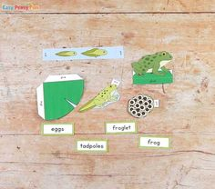Print out our Frog Life Cycle Craft diorama template and make a fun interactive display. Kids will love making this frog craft and learning about frogs. Hot Air Balloon Craft For Kids, Short Funny Stories, Life Cycle Craft, Easy Crafts, Crafts For Kids, Lifecycle Of A Frog, Frog Life, Balloon Crafts, Frog Crafts