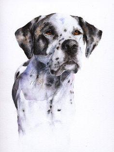 Jane Davies watercolors