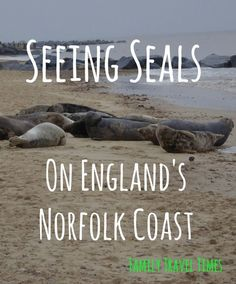 The whole family loved visiting Horsey Beach in Norfolk, because there were hundreds and hundreds of seals! (scheduled via http://www.tailwindapp.com?utm_source=pinterest&utm_medium=twpin&utm_content=post54095122&utm_campaign=scheduler_attribution)