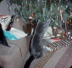 Felix Navidad – 1964 | Flickr - Photo Sharing!