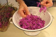 Learn how to make Fireweed jelly, vinegar, scones and more! http://www.uaf.edu/ces/pubs/catalog/detail/index.xml?id=449