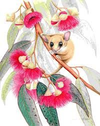 possum magic artwork - Google Search