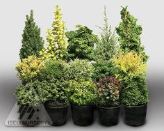 Fanciful Gardens® miniature trees
