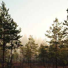 За лето накопилось очень много фотографий, я буду понемногу делиться с вами:) I had many photos this summer and I will share them with you a little:) #vscocam #vsco #vscorussia #nature #forest #wood #landscape #mist #fog #trees #autumn #love #lifestyle #wild #liveadventure #livefolk #livegreen #liveauthentic