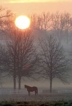 At my dream home, on an early autumn morning. When the sun just peers over the treeline, and shows the fog, and frost on the ground, I will look out and see my horses in their pasture.