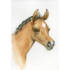 Arabian horse, filly/colt, 5x7 PRINT from original watercolor... ($12) ❤ liked on Polyvore featuring home, home decor, wall art, water colour painting, horse paintings, watercolour painting, watercolor wall art and horse wall art