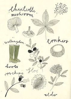 Foraging in the English hedgerow