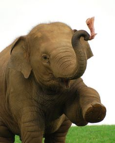 Elephant!! :-)