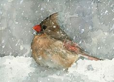 Cardinal watercolor