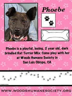 Phoebe is at Woods Humane Society in San Luis Obispo, CA