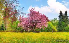 Tapete Frhling, Blumen, Farben auf dem Desktop - die Bildnummer157228
