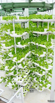 The company already has a working prototype at Paignton Zoo in Devon, producing rapid-cycle leaf vegetable crops, such as lettuce, for the zoo's animals. Hydroponic Farming, Hydroponic Growing, Hydroponics System, Greenhouse Farming, Indoor Farming, Urban Agriculture, Urban Farming, Farming System, City Farm