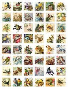 48 Square Images Birds and Nests for by FandangoDigital Vintage Cards, Vintage Images, Papel Vintage, Printable Crafts, Printables, Paper Lotus, Decoupage, Mushroom Crafts, Paper Art
