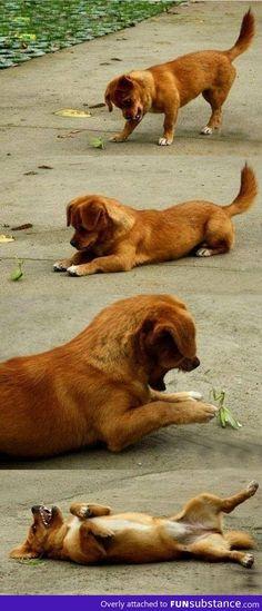 Dog Vs Mantis