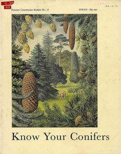 Know Your Conifers - Forestry Commission booklet, 1970 - cover by Charles Tunnicliffe RA by mikeyashworth