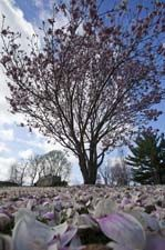 1000 images about cool places to visit in iowa on - Dubuque arboretum and botanical gardens ...