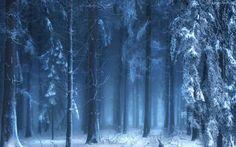 Las, Śnieg