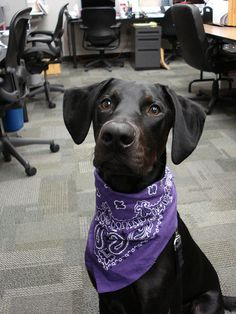 I love being able to bring the dog to work. <3