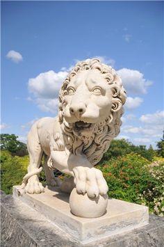 Поговорим?) - Лев цвеЛ Красавец из парка у дворца в Компьене (Château de Compiègne)
