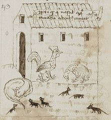 Chickens and Cat - Pen drawing-- Farm yard. St Gallen Stiftsbibliothek Cod Sang 643