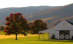 Virginia wine country in the Fall. A Charlottesville wedding photo taken by Jack Looney Photography. Monticello Wine Trail, Vineyard Wedding Venues, Shenandoah Valley, Charlottesville, Wine Country, Wedding Vendors, 3, Countryside, Real Weddings