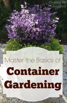Think you don't have enough time or space for a garden?  Try a container garden! via /creatingmyhappy/