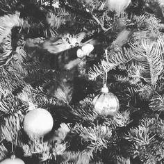 Milo having fun #cat #catinachristmastree #playingwithornaments #funnycat #christmas #christmastree