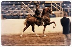 Undulata's Witchy Woman, a 5-Gaited American Saddlebred with Liz Bolton up.