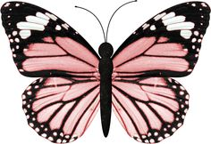 Butterflies and BlueJeans Bundle — Yandex. Butterfly Drawing, Butterfly Painting, Butterfly Wallpaper, Pink Butterfly, Vintage Butterfly, Butterfly Wings, Mariposa Butterfly, Butterfly Pictures, Bugs And Insects