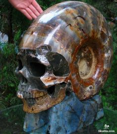 carved from Ammonite fossil stone very realistic. Crystals Minerals, Rocks And Minerals, Rock Collection, Rocks And Gems, Crystal Skull, Skull And Bones, Stone Carving, Skull Art, Sculpting