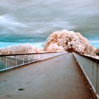 An In-Depth Guide to Infrared Photography